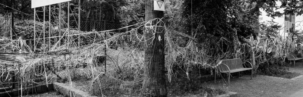 Viele Wollfäden gehen von einem Baum ab